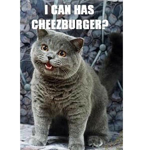 Cats Cheezeburger